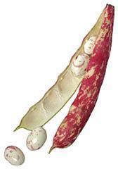 fagioli sarconi