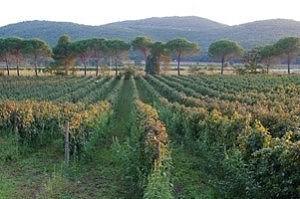 La Marsiliana paesaggio