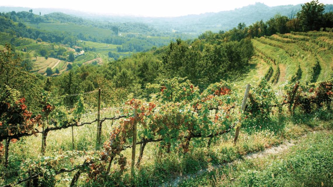viticoltura lariana